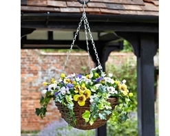 Easy Basket - Pansy