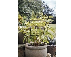 Tom Chambers Herbaceous Plant Support Twin Pack
